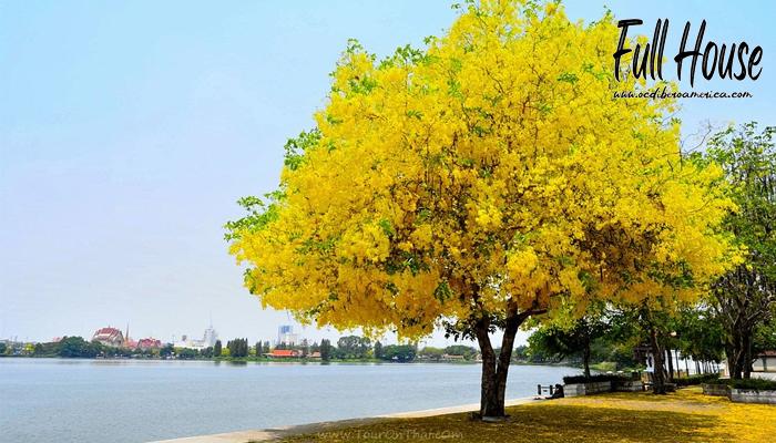 4 ต้นไม้ปลูกแล้วเรียกเงินเรียกทองเข้าบ้าน